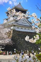 小倉城2021 3月 桜と天守①