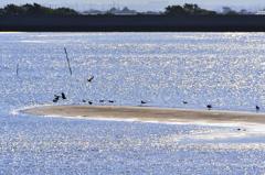 真玉海岸2021 10月-1 海鳥