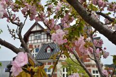 門司港レトロ2019 桜&国際友好記念図書館
