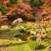 魚楽園2020 秋-2 雪舟庭園