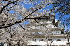 小倉城2021 3月 桜と天守③