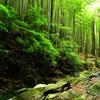 竜王峡2020-1 竹林