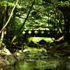 菅生の滝2020 8月-1 橋①