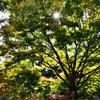 環境芸術の森2020 秋-3 陽光