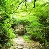 菅生の滝2020 8月-3 石畳②