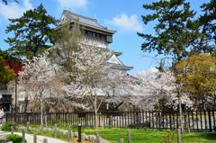 小倉城2021 3月 桜と天守④
