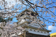 小倉城2021 3月 桜と天守②
