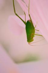 白野江2021 7月-6 ナツズイセンと昆虫