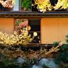 環境芸術の森2020 秋-2 風遊山荘 照明
