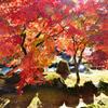 渓石園2020 11月-1 紅葉①