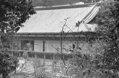 小倉城2021 1月-2 下屋敷庭園 ③
