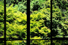 環境芸術の森2020 6月-3 風遊山荘③