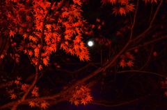 由志園2020 11月-1 紅葉とお月さん