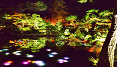 由志園2020 11月-1 日本庭園 ライトアップ①