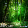 竹と光と。
