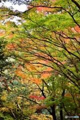 奈良公園の紅葉01