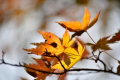 護摩山からの紅葉2
