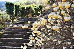 熊野那智大社 石畳の古道03