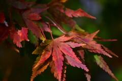 護摩山からの紅葉3