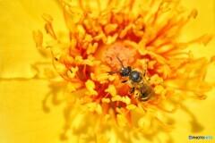 蜜蜂の大切な仕事