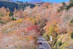 護摩山からの紅葉1