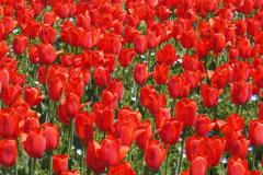 春の彩 2
