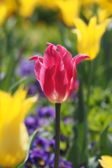 春の彩 6