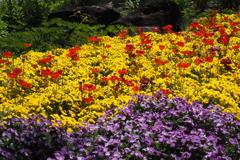 春の彩 5