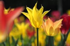 春の彩 3