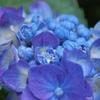 水晶玉を生む花