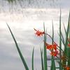 映る空 映える花