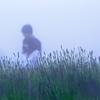 霧のたんばらラベンダーパーク 2