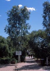 ウルル  outback