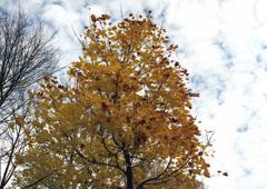 デュッセルドルフ 庭に秋