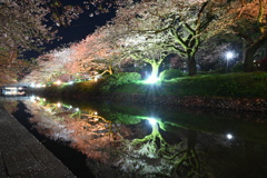 富山県松川ばりの夜桜2