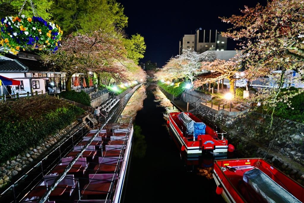 富山の松川ベリの夜桜