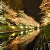 富山市松川の夜桜