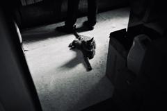 キッチンの守り猫