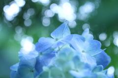 森の中の紫陽花