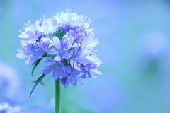 淡い青の世界