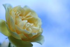 淡い黄色 淡い青空