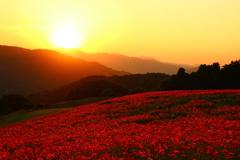 夕陽の天空のポピー