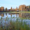 沼に写り込む秋の気配