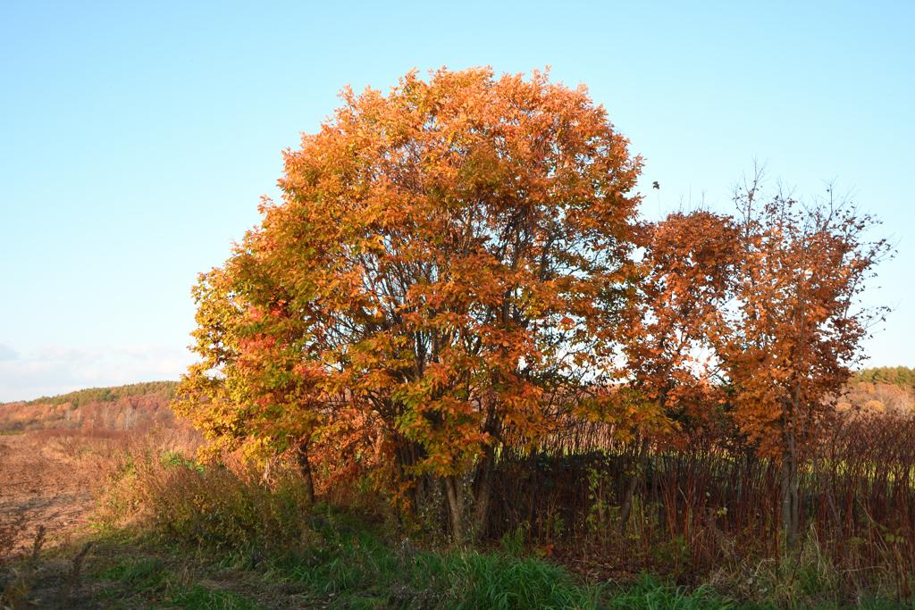 秋の夕日を浴びて