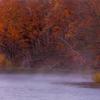晩秋の蒸気霧