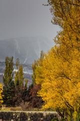 ポプラ並木と吹雪く手稲山