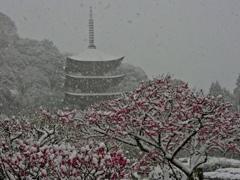 雪と梅と五重塔