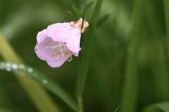 藪に一輪の花