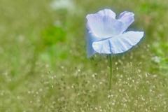 一輪の花 2