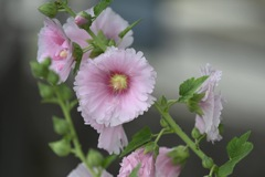 昼下がりに咲く花